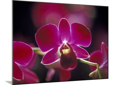 Taman Orchid, Kuala Lumpur, Malaysia-Michele Molinari-Mounted Photographic Print