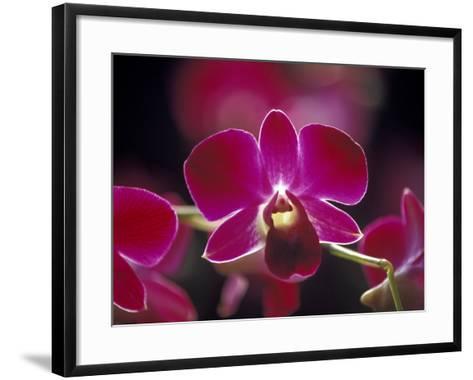 Taman Orchid, Kuala Lumpur, Malaysia-Michele Molinari-Framed Art Print