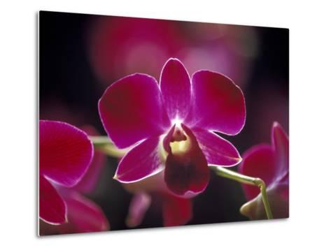 Taman Orchid, Kuala Lumpur, Malaysia-Michele Molinari-Metal Print