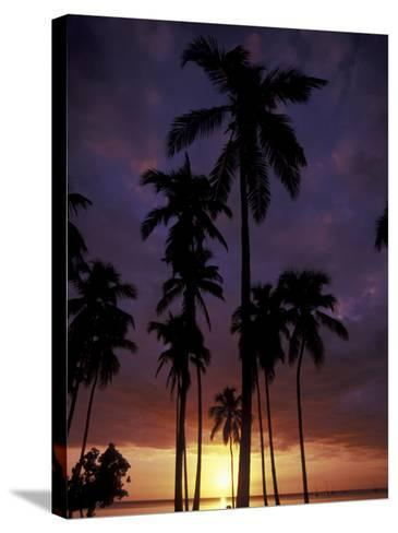 Palm Trees at Sunset, Puerto Rico-Greg Johnston-Stretched Canvas Print