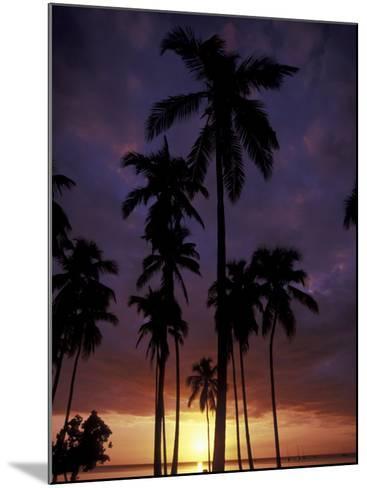 Palm Trees at Sunset, Puerto Rico-Greg Johnston-Mounted Photographic Print