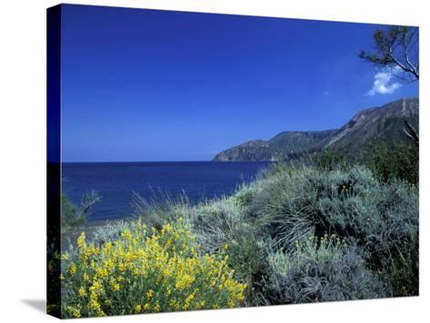 Broom Flowers and the Mediterranean Sea, Sicily, Italy-Michele Molinari-Stretched Canvas Print