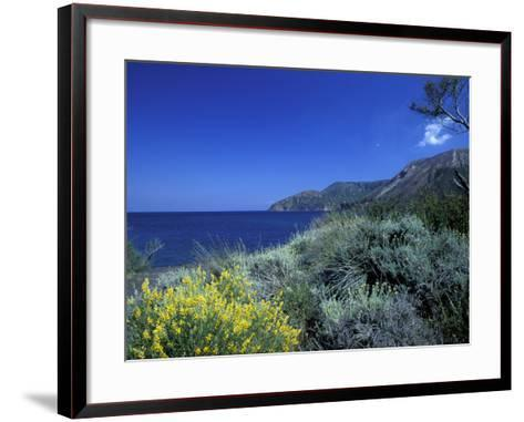 Broom Flowers and the Mediterranean Sea, Sicily, Italy-Michele Molinari-Framed Art Print