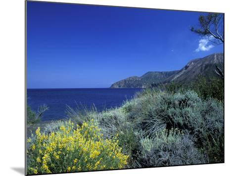 Broom Flowers and the Mediterranean Sea, Sicily, Italy-Michele Molinari-Mounted Photographic Print