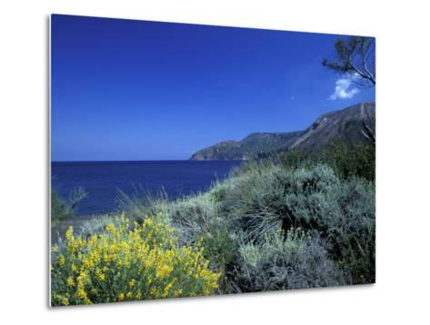 Broom Flowers and the Mediterranean Sea, Sicily, Italy-Michele Molinari-Metal Print