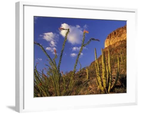 Organ Pipe Cactus with Ocotillo, Organ Pipe Cactus National Monument, Arizona, USA-Jamie & Judy Wild-Framed Art Print