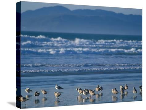 Pismo Beach, California, USA-Nik Wheeler-Stretched Canvas Print