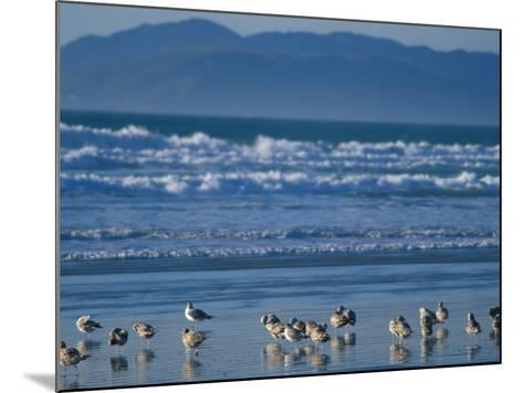 Pismo Beach, California, USA-Nik Wheeler-Mounted Photographic Print