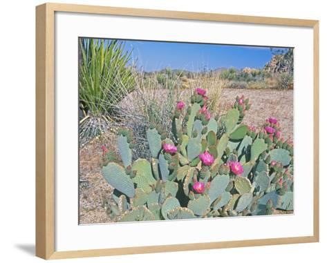 Beavertail Cactus, Joshua Tree National Park, California, USA-Rob Tilley-Framed Art Print