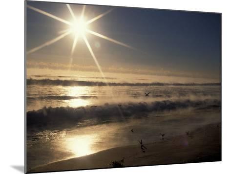 Ocean on Winter Morning, Florida, USA-Nik Wheeler-Mounted Photographic Print
