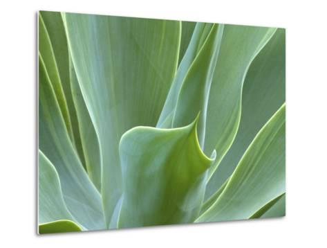 Agave Plant, Maui, Hawaii, USA-Julie Eggers-Metal Print