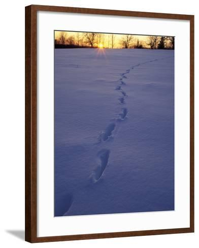 Sunrise over Snowfield with Deer Tracks in Winter, Northern Forest, Maine, USA-Jerry & Marcy Monkman-Framed Art Print