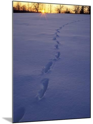 Sunrise over Snowfield with Deer Tracks in Winter, Northern Forest, Maine, USA-Jerry & Marcy Monkman-Mounted Photographic Print