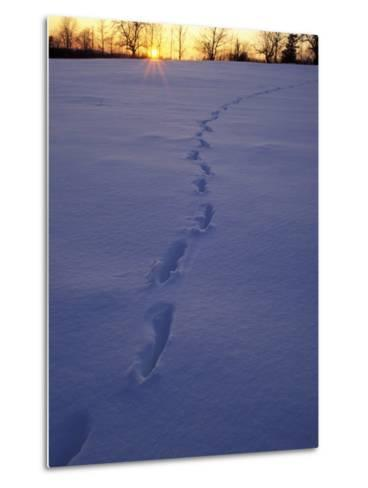 Sunrise over Snowfield with Deer Tracks in Winter, Northern Forest, Maine, USA-Jerry & Marcy Monkman-Metal Print