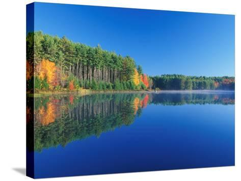 White Pines and Hardwoods, Meadow Lake, New Hampshire, USA-Jerry & Marcy Monkman-Stretched Canvas Print