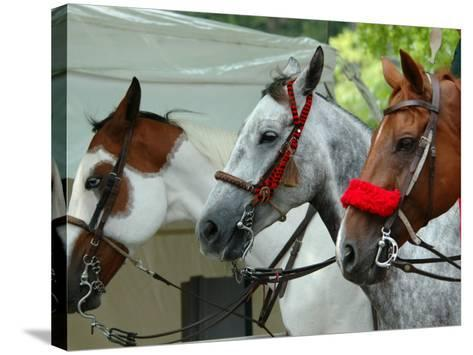 Horses Paraded Before the Race, Saratoga Springs, New York, USA-Lisa S^ Engelbrecht-Stretched Canvas Print