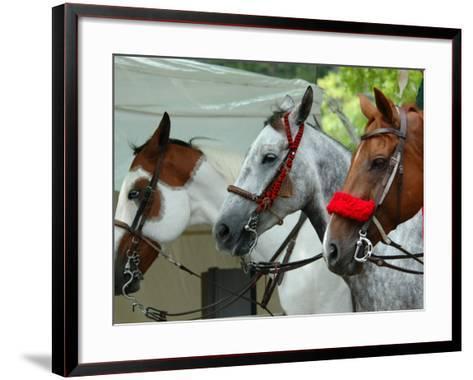 Horses Paraded Before the Race, Saratoga Springs, New York, USA-Lisa S^ Engelbrecht-Framed Art Print
