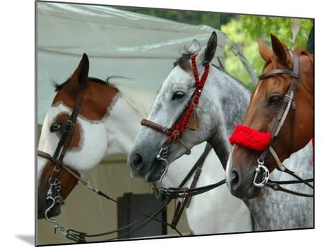 Horses Paraded Before the Race, Saratoga Springs, New York, USA-Lisa S^ Engelbrecht-Mounted Photographic Print