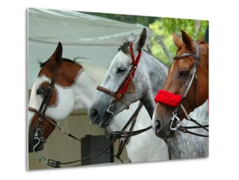 Horses Paraded Before the Race, Saratoga Springs, New York, USA-Lisa S^ Engelbrecht-Metal Print