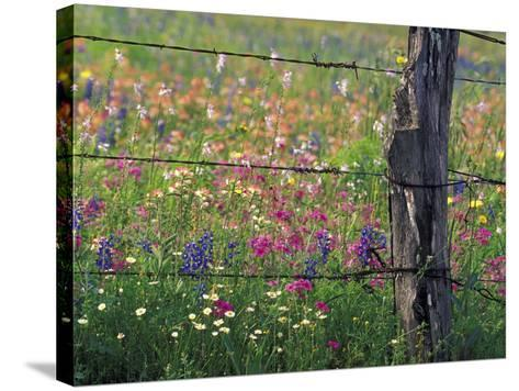 Fence Post and Wildflowers, Lytle, Texas, USA-Darrell Gulin-Stretched Canvas Print