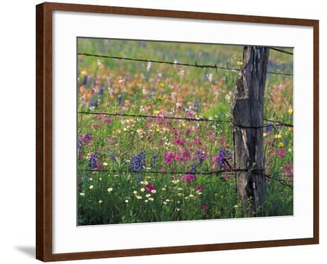 Fence Post and Wildflowers, Lytle, Texas, USA-Darrell Gulin-Framed Art Print