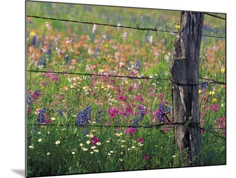 Fence Post and Wildflowers, Lytle, Texas, USA-Darrell Gulin-Mounted Photographic Print