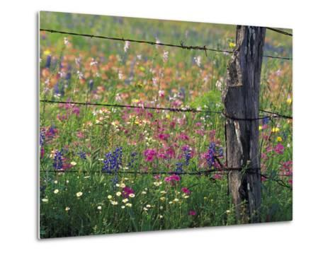 Fence Post and Wildflowers, Lytle, Texas, USA-Darrell Gulin-Metal Print