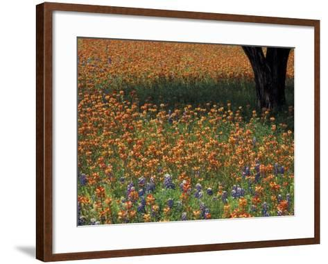 Paintbrush and Tree Trunk, Hill Country, Texas, USA-Darrell Gulin-Framed Art Print