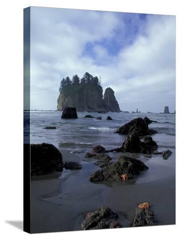 Sea Stacks and Sea Stars on Second Beach, Olympic National Park, Washington, USA-Jamie & Judy Wild-Stretched Canvas Print