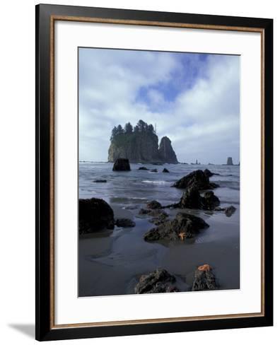 Sea Stacks and Sea Stars on Second Beach, Olympic National Park, Washington, USA-Jamie & Judy Wild-Framed Art Print