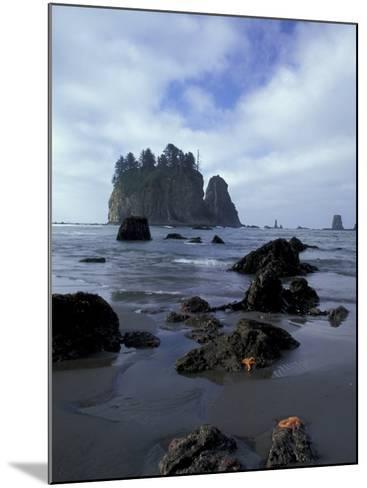 Sea Stacks and Sea Stars on Second Beach, Olympic National Park, Washington, USA-Jamie & Judy Wild-Mounted Photographic Print