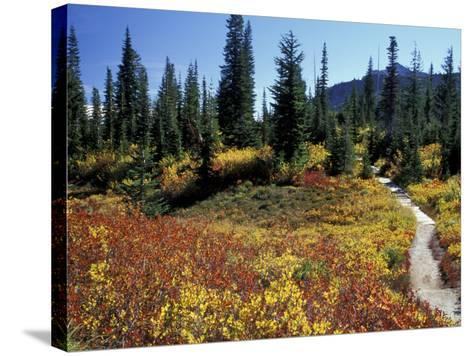 Beach Lake Trail with Fall Color, Mt. Rainier National Park, Washington, USA-Jamie & Judy Wild-Stretched Canvas Print