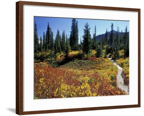 Beach Lake Trail with Fall Color, Mt. Rainier National Park, Washington, USA-Jamie & Judy Wild-Framed Art Print