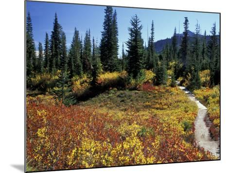 Beach Lake Trail with Fall Color, Mt. Rainier National Park, Washington, USA-Jamie & Judy Wild-Mounted Photographic Print