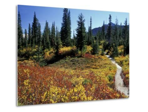 Beach Lake Trail with Fall Color, Mt. Rainier National Park, Washington, USA-Jamie & Judy Wild-Metal Print