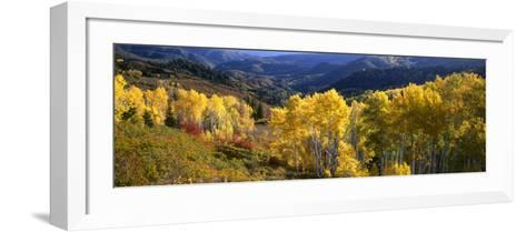 View Down Nebo Creek Drainage, Wasatch Mountains, Uinta National Forest, Utah, USA-Scott T^ Smith-Framed Art Print