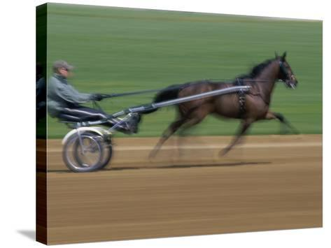 Red Mile Harness Track, Lexington, Kentucky, USA--Stretched Canvas Print