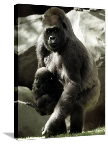 Mother Gorilla Julia--Stretched Canvas Print