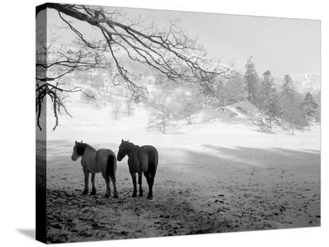 Winter Wonderland: Snow Scene in the Lake District, January 1946--Stretched Canvas Print