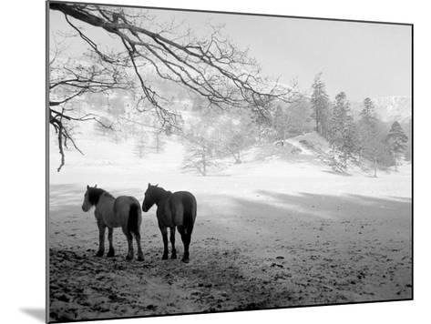 Winter Wonderland: Snow Scene in the Lake District, January 1946--Mounted Photographic Print