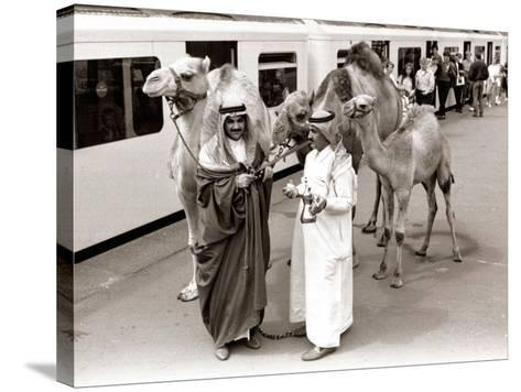 Camels with Arab Handlers at Olympia Station, August 1986--Stretched Canvas Print