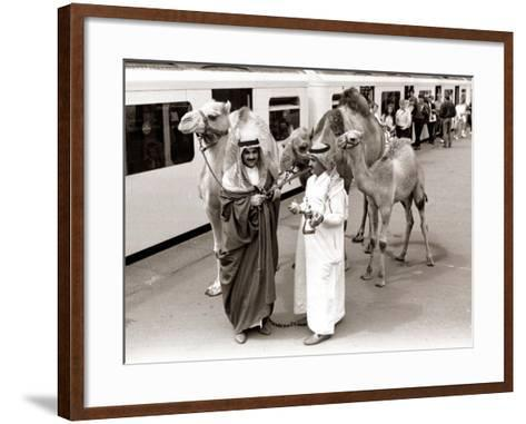 Camels with Arab Handlers at Olympia Station, August 1986--Framed Art Print