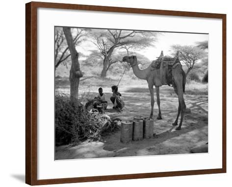 Local Men of Somaliland with Their Camels, 1935--Framed Art Print