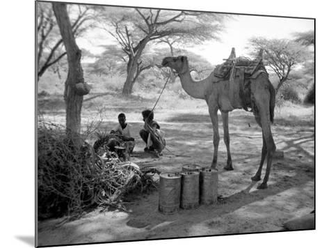 Local Men of Somaliland with Their Camels, 1935--Mounted Photographic Print