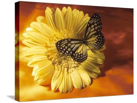 Black and Yellow Butterfly on Yellow Flower--Stretched Canvas Print