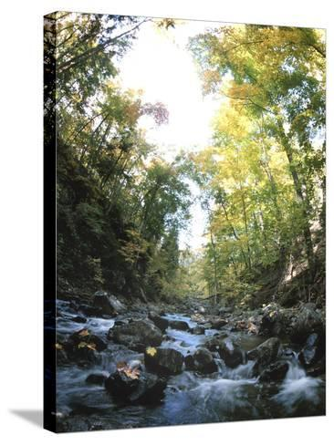 Rapids in Sunny Forest--Stretched Canvas Print