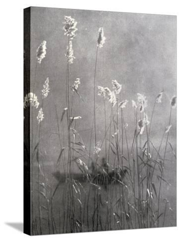 Wild Flowers Growing on Te Banks of a Pond--Stretched Canvas Print
