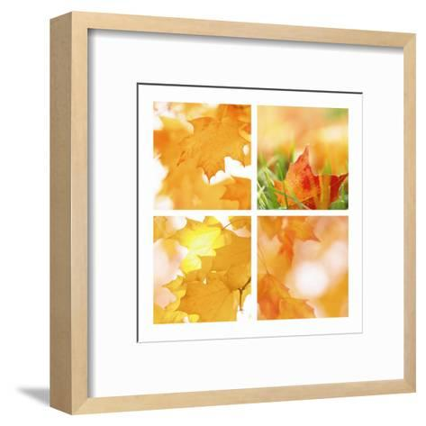 Autumn Maple Leaves Four Patch--Framed Art Print