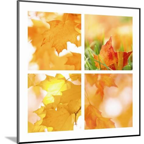 Autumn Maple Leaves Four Patch--Mounted Art Print