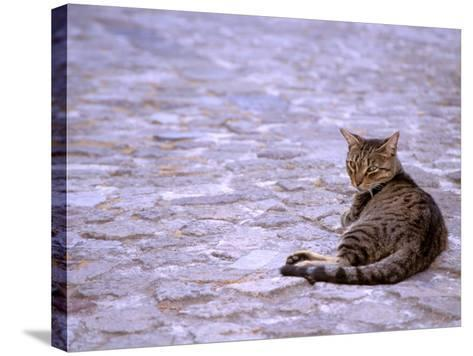 Cat in Street, Lipari, Sicily, Italy-Connie Bransilver-Stretched Canvas Print